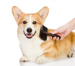 liability insurance liability insurance dog groomers