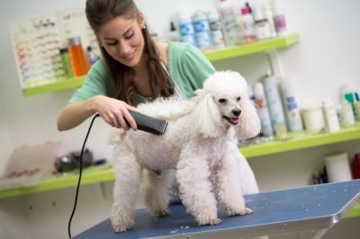Dog Groomer Insurance / Pet Groomer Insurance / Mobile Groomer Insurance