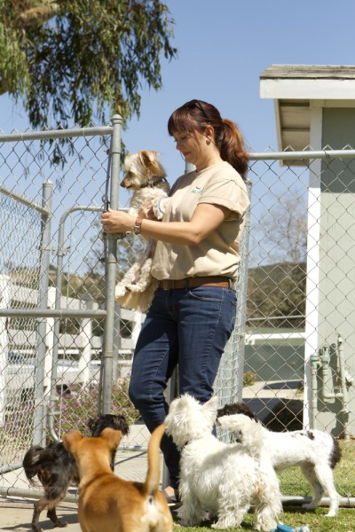 Doggy Day Care Insurance / Boarding Kennel Insurance